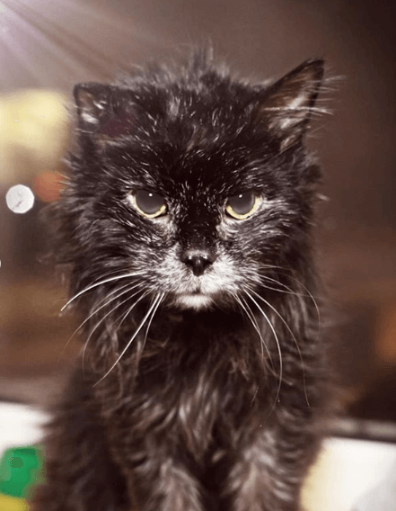 кошка, домашнее животное, окно, дом