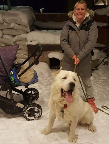 собака, коляска, женщина, зима, алабай