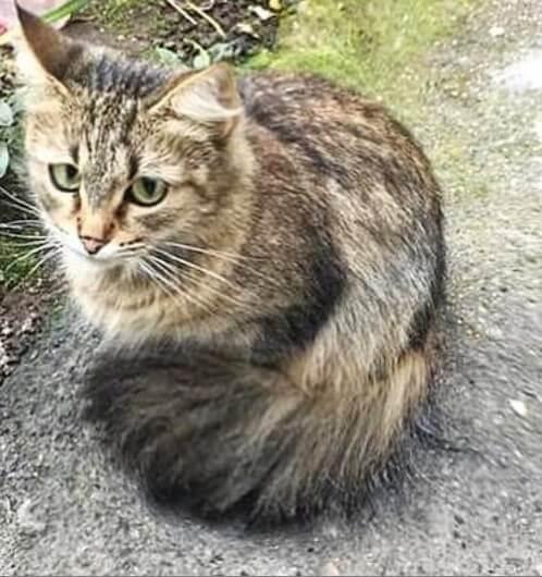 кошка, домашнее животное, улица
