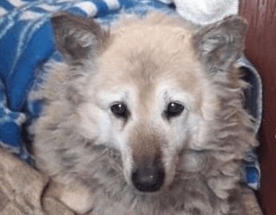 собака, дом, питомец, одеяло