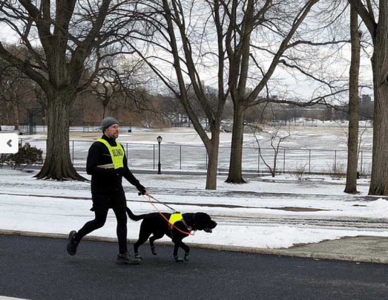 собака принимает участие в марафоне