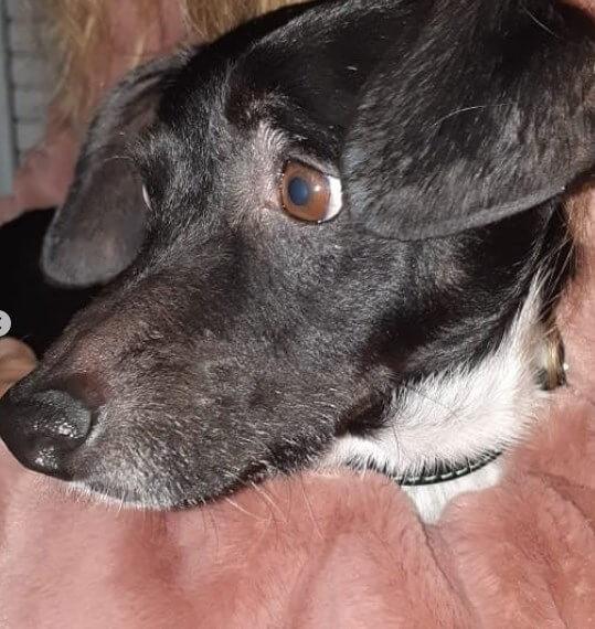 собака, дворняжка, плед