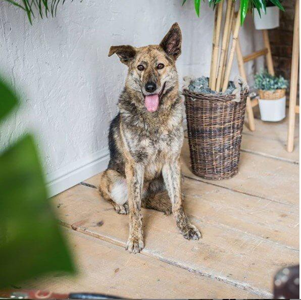 домашнее животное, собака, дом