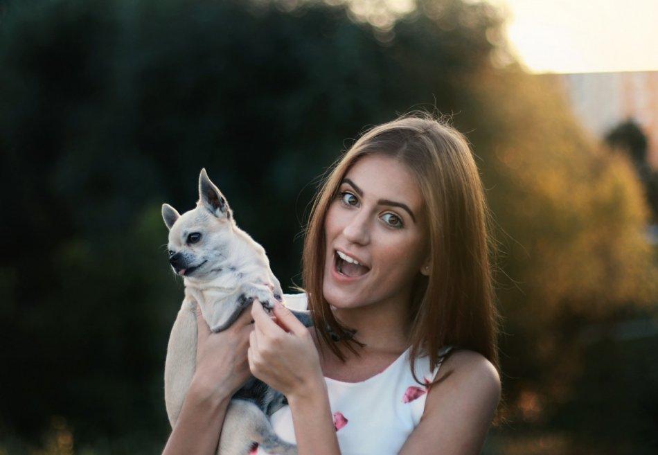 Женщина держит на руках чихуахуа, а собака отворачивается фото