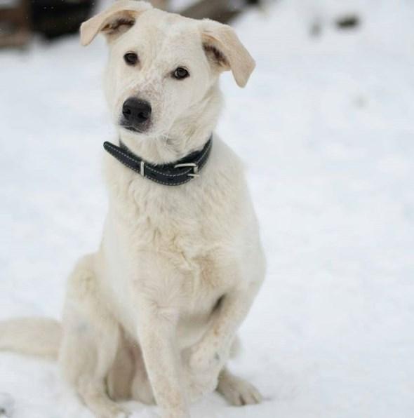 собака, зима, снег, улица