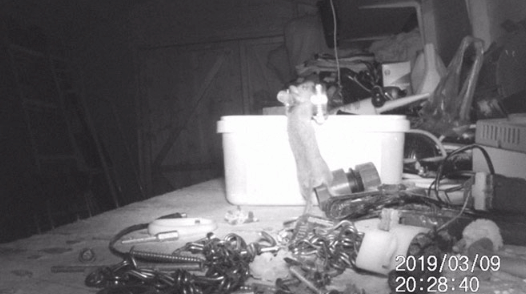 мышь, грызун, сарай, видеокамера