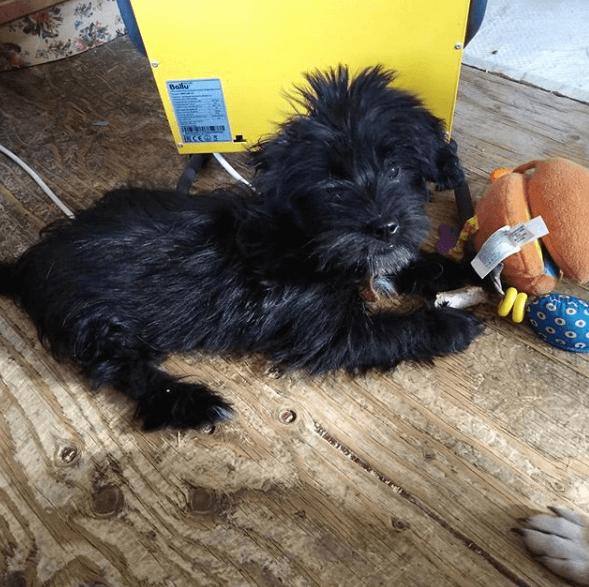 собака, игрушки, дом, пол