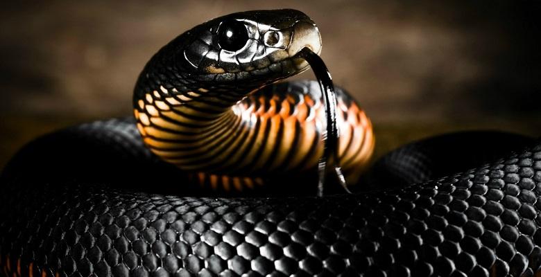 змея, сон, год змеи