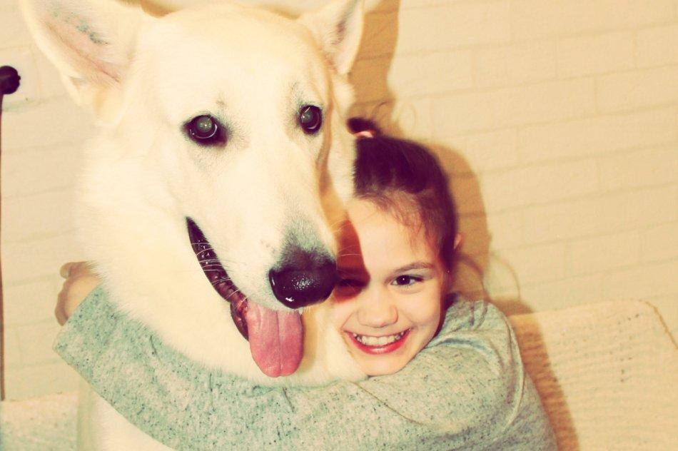 Девочка обнимает собаку белую швейцарскую овчарку, ребенок и собака фото