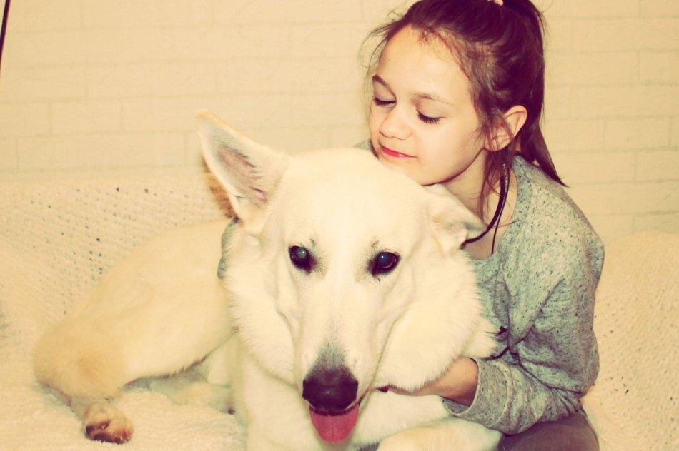 Девочка ребенок и белая швейцарская овчарка собака фото