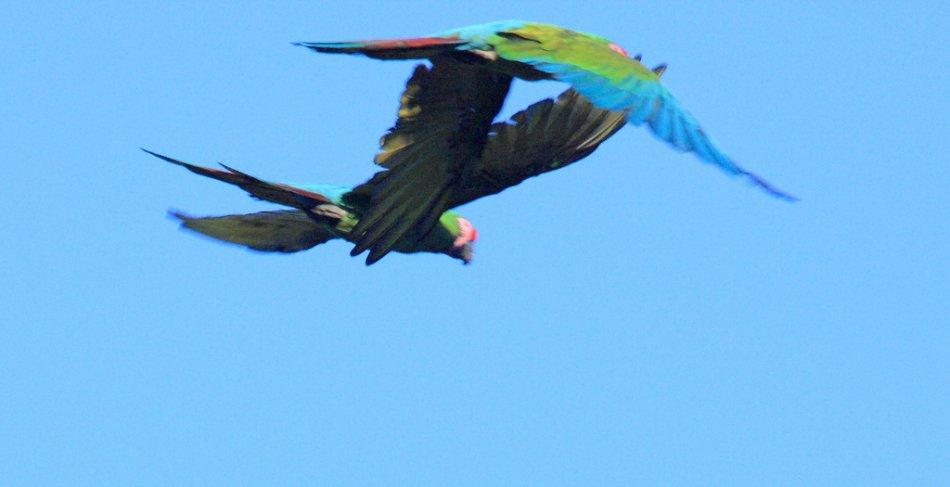 Солдатские ара летят на фоне неба фото