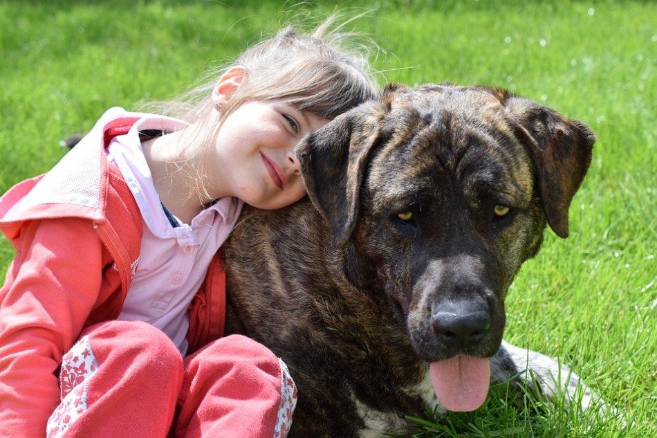 Крупная собака и ребенок фото