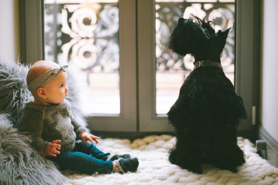 Скотчтерьер и ребенок фото