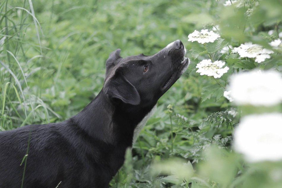 собака, цветок, лето, природа, животное