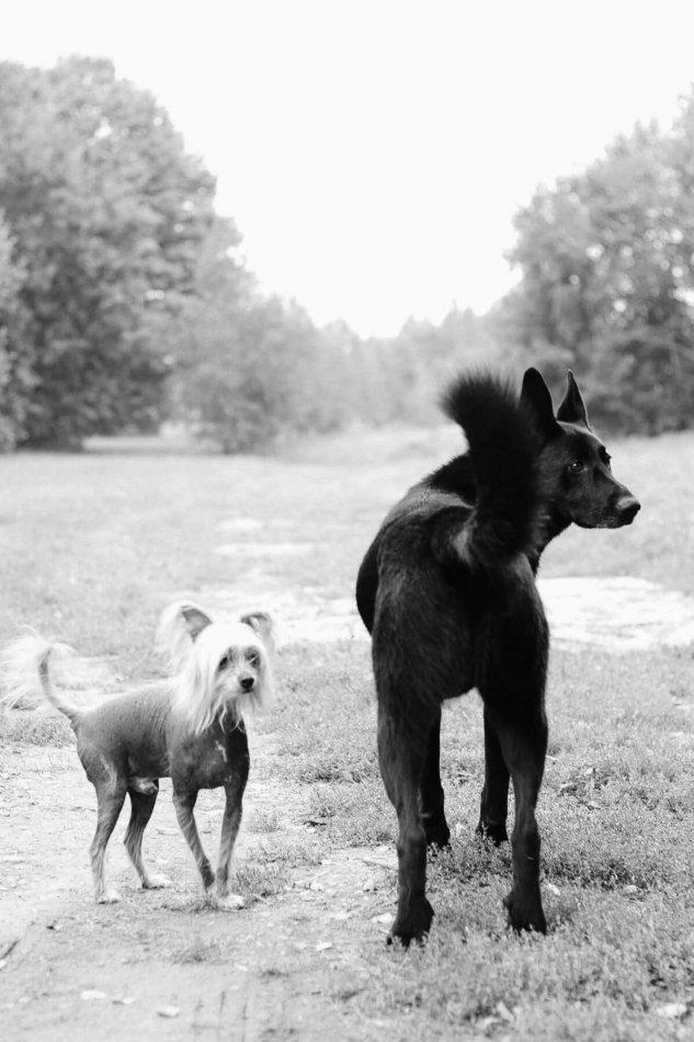 собаки, дорога, друзья, попутчики, домашнее животное