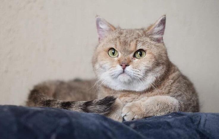 кошка, кот, питомец, диван, домашний любимец