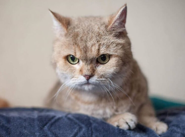 домашний любимец, домашний питомец, кот, кошка, диван