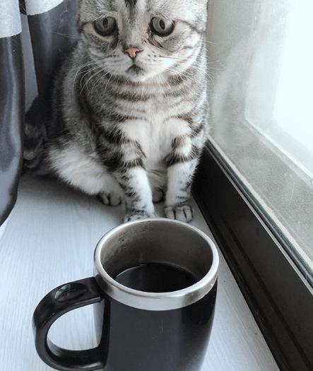 кошка, кружка, кофе, подоконник