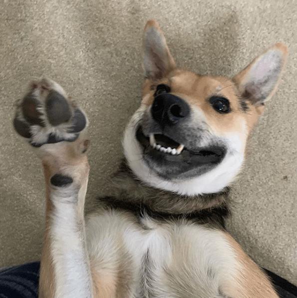 собака, питомец, дом