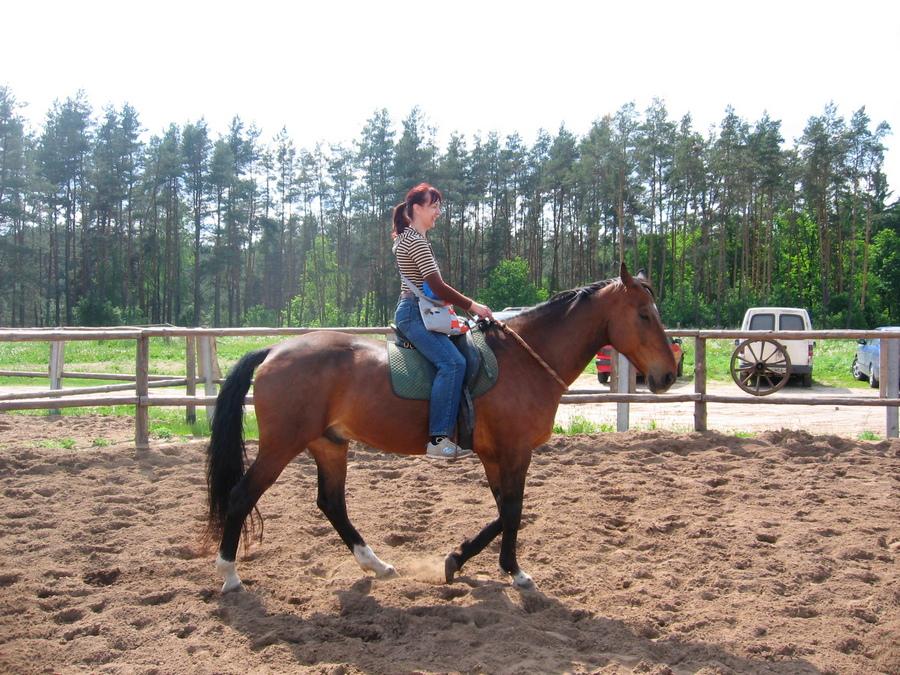 Человек едет на гнедой лошади на кордео фото