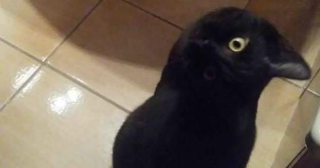 кот, ворона, взгляд, клюв
