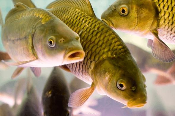 рыба в воде, приснилась рыба