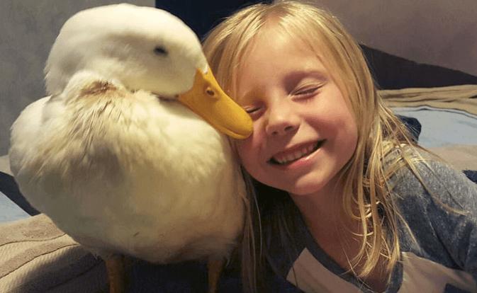 утка, девочка, ребенок, птица