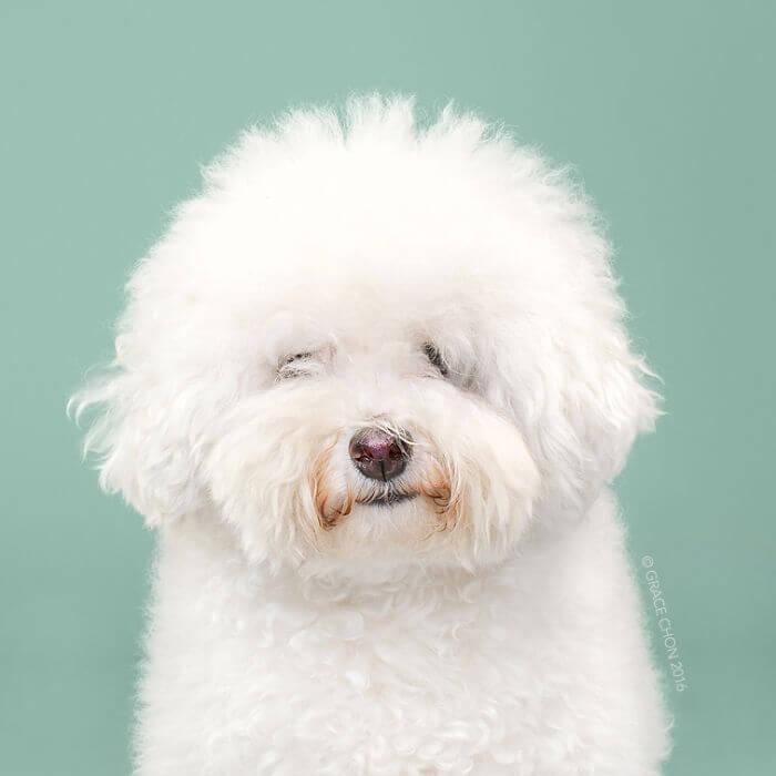груминг собак, домашнее животное