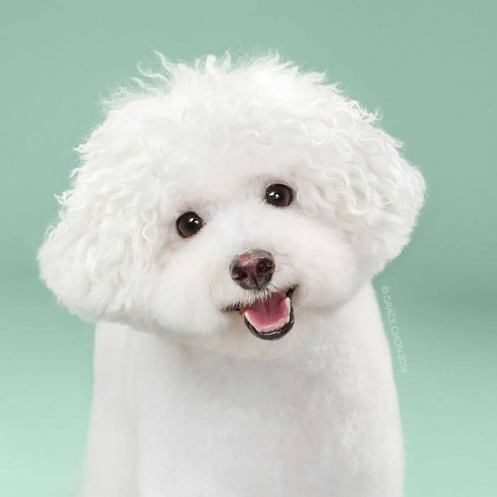 пес, домашний питомец