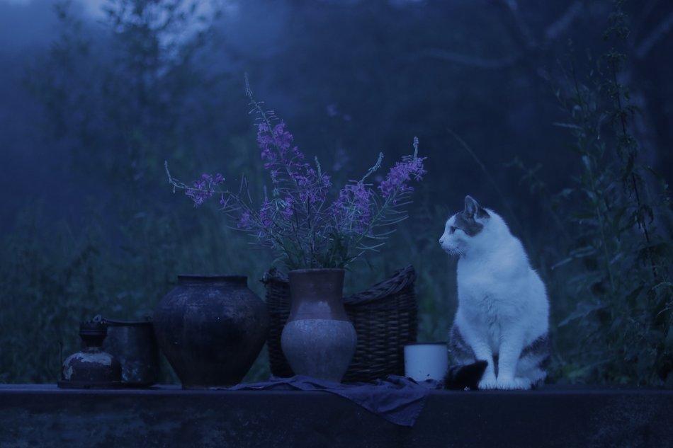 Кошка сидит на столе в саду фото