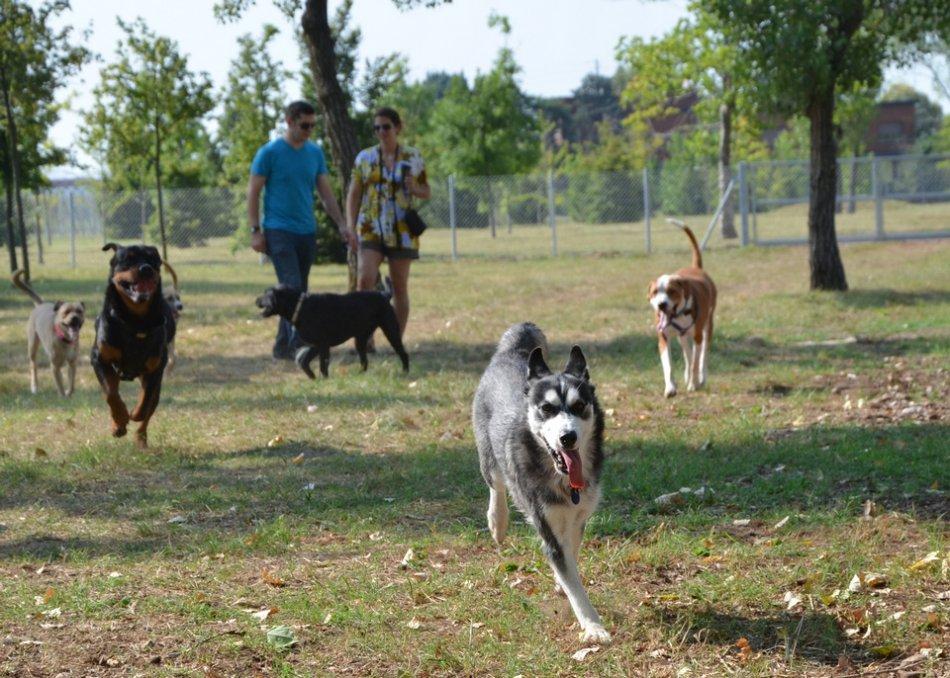 Собаки разных пород играют в парке фото