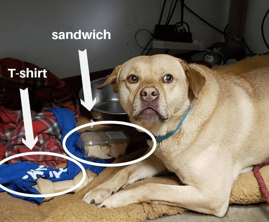 лежанка, покрывало, майка, футболка, миска, сэндвич, пес, собака