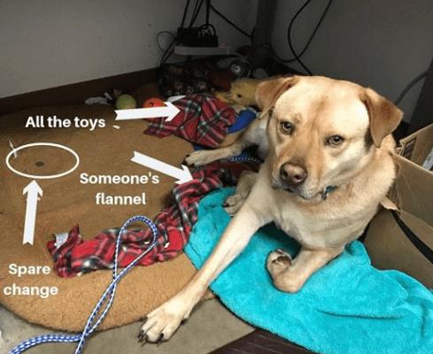 лежанка, покрывало, пес, собака, игрушки