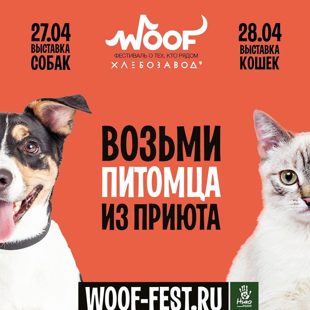 Woof фестиваль о тех, кто рядом