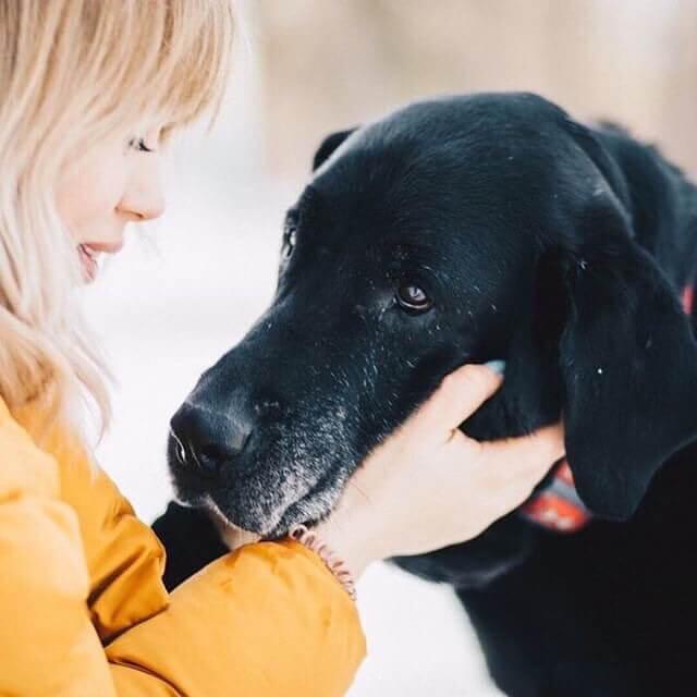собака, девушка, лабрадор