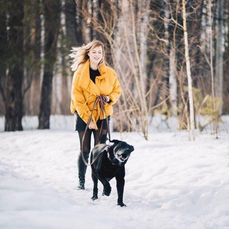 прогулка с собакой, улица, зима, лабрадор