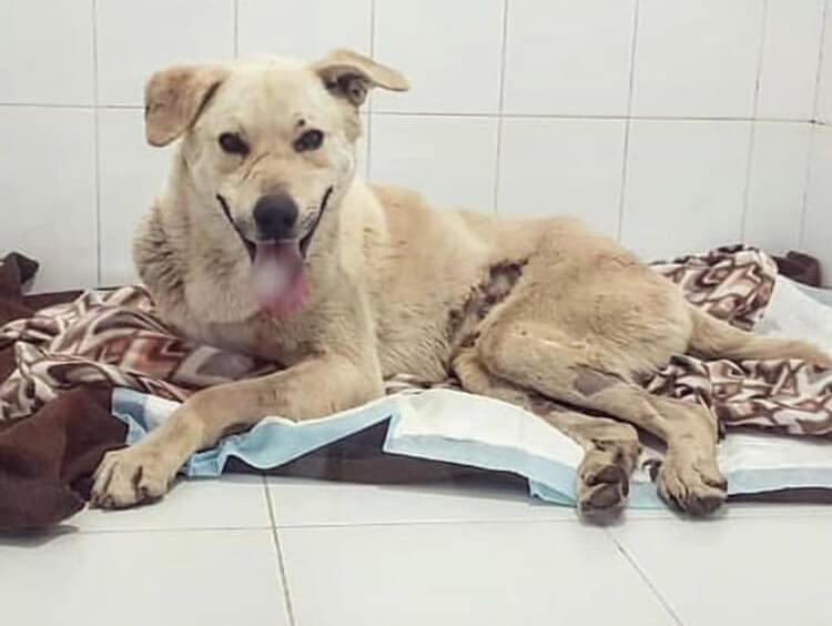 клиника, больница, покрывало, одеяло, собака, пес