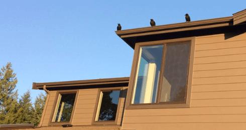 дом, крыша, природа, птицы, вороны, жилье, окно