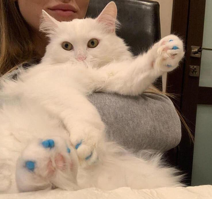 кошка, кот, лапы, когти, рука, лицо, человек