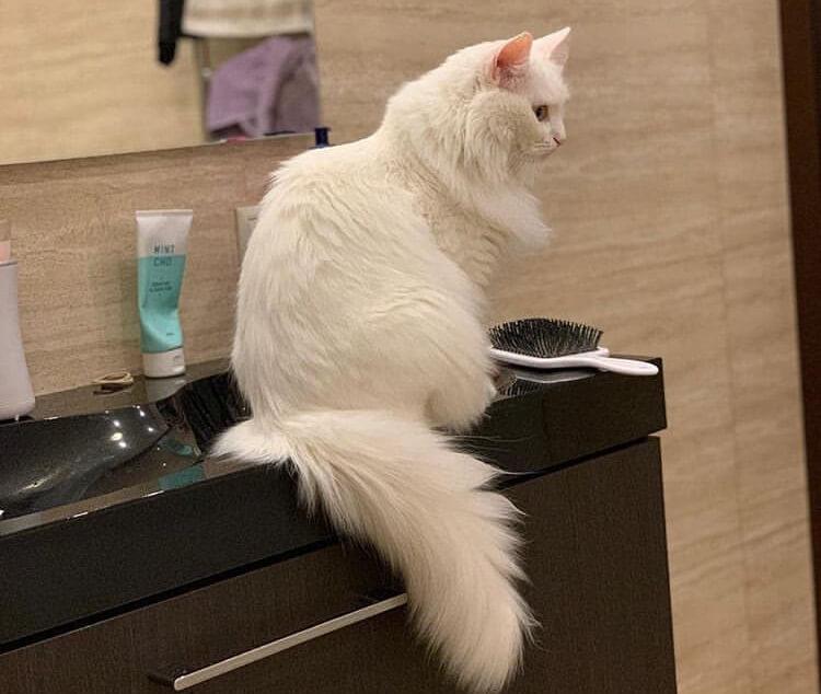 шкаф, тумбочка, кошка, кот, расческа, зеркало, крем, обои