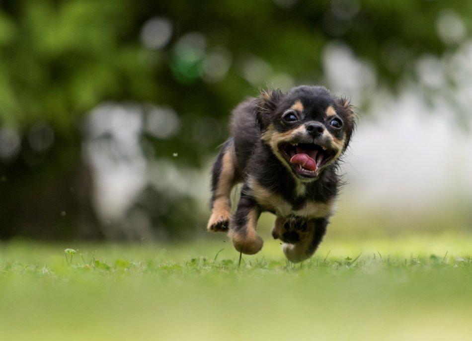 Щенок несется по траве фото