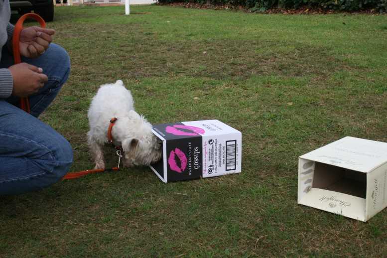 Вест хайленд уайт терьер собака ноузворк фото