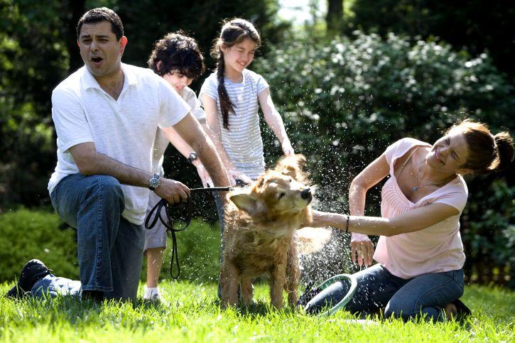 Семья моет собаку золотистого ретривера из шланга фото