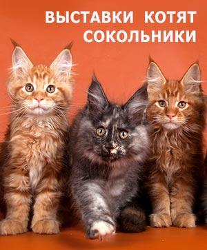 Рекламная выставка котят