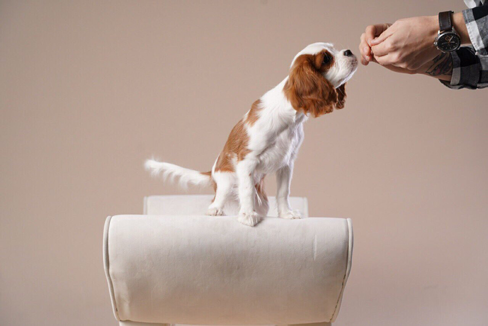 Лакомство летит к носу собаки фото