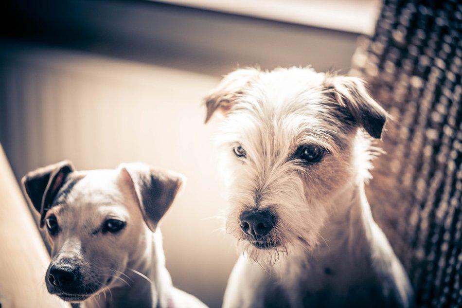 Две собаки сидят крупным планом фото
