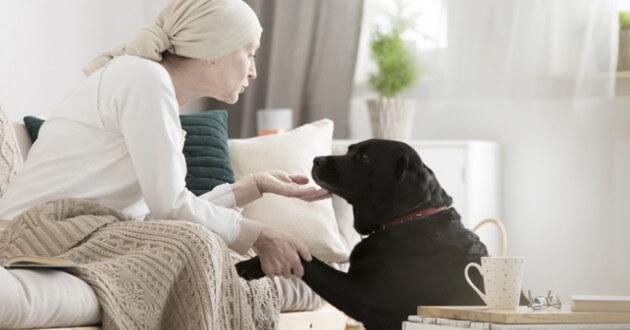 человек и собака, собака чувствует болезнь