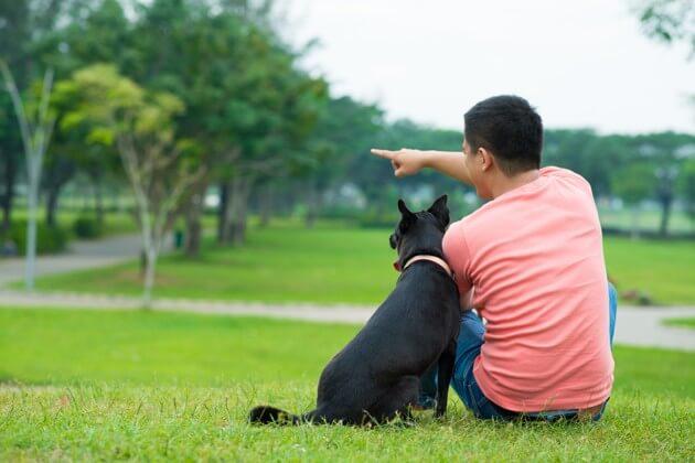 собака и хозяин, лето, прогулка с собакой