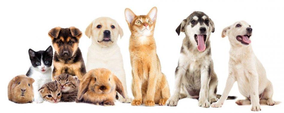 Разные животные на одном фото