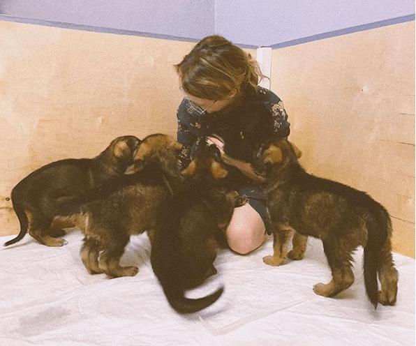 девушка, щенки, овчарка, домашнее животное